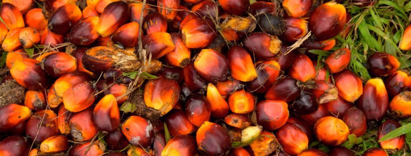 aceite de palma en la industria